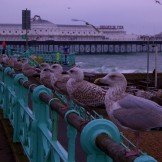 11 Seagulls on Brighton Seafront on 11 11 11
