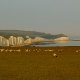Sheep at Seven Sisters